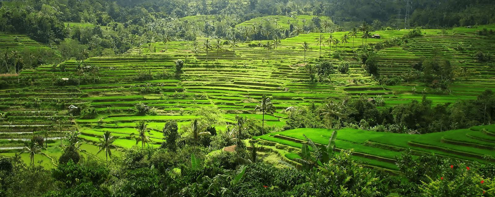 Kombinations-Reisen durch Bali