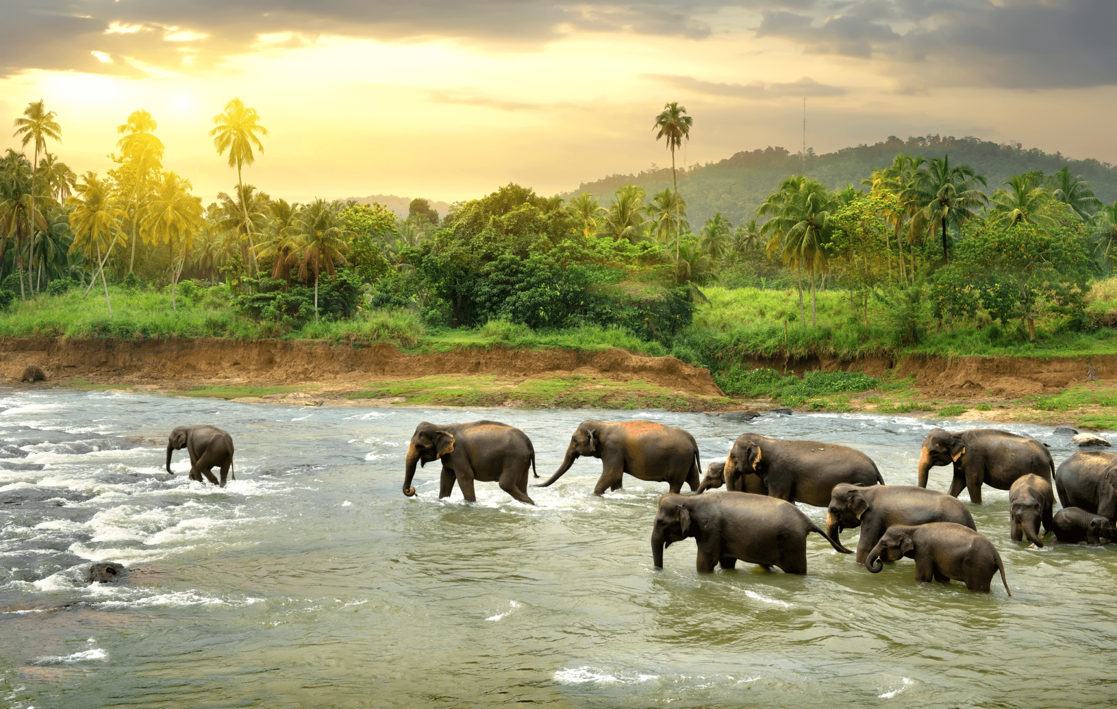 Kombireise durch Sri Lanka und Indien