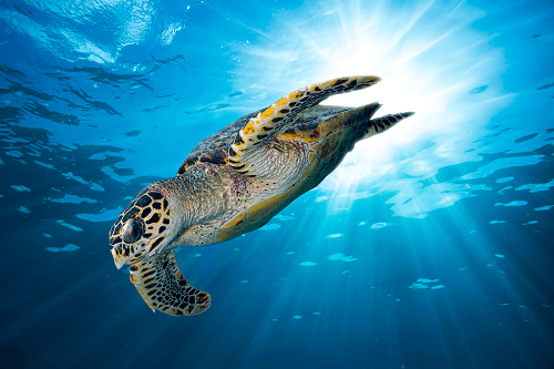 Tauchen auf den Seychellen