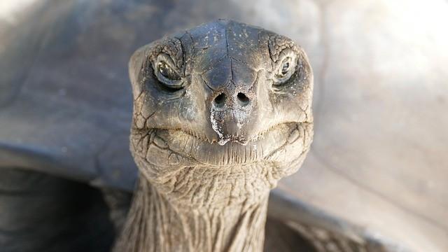 Bird Island, North Island, Silhouette Island und Desroches - Riersenschildkröte Seychellen